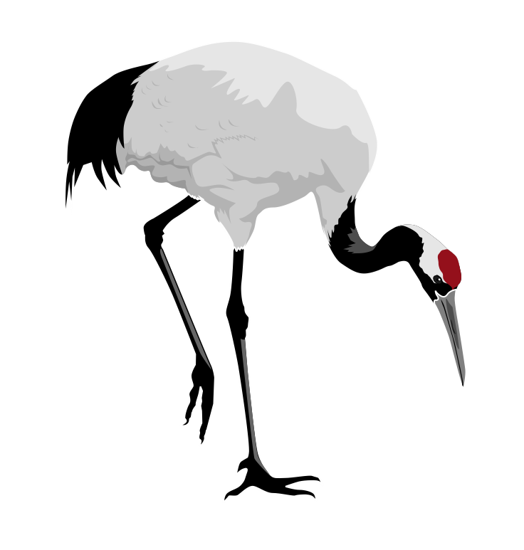 a crane bird looking at the ground